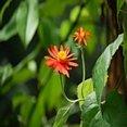 Foto Rode bloemen
