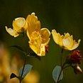 Bloemen Geel