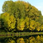 Kanaal met Herfst Kleuren