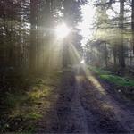 Foto Ochtendzon in het Bos