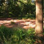 Bos landschap en boom
