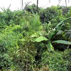 Jungle Landschap
