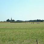 Brabants landschap met koeien