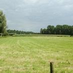 Grasland weiland