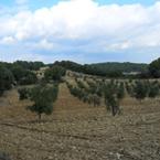 Spaanse heuvels