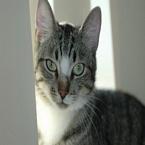 Kat met tegenlicht