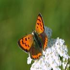 Vlinder Macro foto