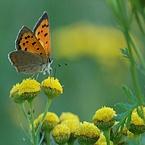 Macro foto's Vlinder