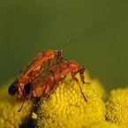 Insecten Macro foto