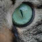 close up kattenoog
