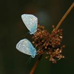 plaatje vlindertjes