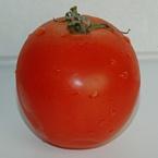 Tomaat van dichtbij
